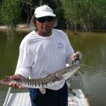 Surubim Catfish in the Amazon